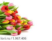 Купить «Букет тюльпанов», фото № 1967406, снято 3 апреля 2009 г. (c) Наталия Кленова / Фотобанк Лори