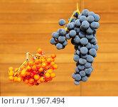 Купить «Гроздь винограда и гроздь рябины», эксклюзивное фото № 1967494, снято 11 сентября 2010 г. (c) Юрий Морозов / Фотобанк Лори