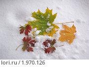 Осенние листья на снегу. Стоковое фото, фотограф Yury Ivanov / Фотобанк Лори