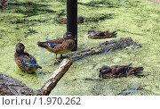 Купить «Мандаринки», фото № 1970262, снято 29 августа 2010 г. (c) Елена Гордеева / Фотобанк Лори