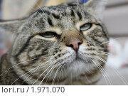 Купить «Наглая мордашка», фото № 1971070, снято 11 сентября 2010 г. (c) Анна Алексеева / Фотобанк Лори