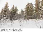 Купить «Сосновый зимний лес в снегу», фото № 1979546, снято 12 февраля 2010 г. (c) pzAxe / Фотобанк Лори