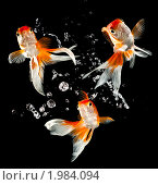 Купить «Золотые рыбки», фото № 1984094, снято 16 января 2019 г. (c) Андрей Армягов / Фотобанк Лори
