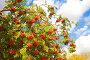 Осенние краски, фото № 1989046, снято 21 сентября 2010 г. (c) Наталья Волкова / Фотобанк Лори