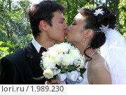 Поцелуй молодоженов. Стоковое фото, фотограф Евгений Курлыкин / Фотобанк Лори