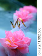 Купить «Свадебные цветы», фото № 1992606, снято 25 июля 2009 г. (c) Наталья Блинова / Фотобанк Лори
