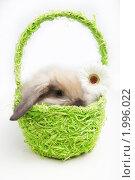 Купить «Маленький кролик в зеленой корзине с цветком», фото № 1996022, снято 21 сентября 2010 г. (c) Raev Denis / Фотобанк Лори