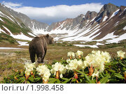 Купить «Камчатский пейзаж. Медведь», фото № 1998458, снято 19 июня 2010 г. (c) Ирина Игумнова / Фотобанк Лори