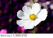 Купить «Космея в саду», фото № 1999918, снято 26 июня 2019 г. (c) Parmenov Pavel / Фотобанк Лори