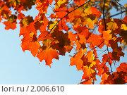 Купить «Осенние листья на фоне неба», фото № 2006610, снято 20 ноября 2018 г. (c) Светлана Привезенцева / Фотобанк Лори
