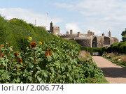 Подсолнухи на фоне крепости (2010 год). Стоковое фото, фотограф Konstantin / Фотобанк Лори