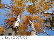 Осенний лес. Стоковое фото, фотограф Андрей Чугуй / Фотобанк Лори