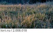 Иней на траве. Стоковое фото, фотограф Евгений Ореховский / Фотобанк Лори