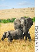 Купить «Африканский слон со слоненком, Кения», фото № 2008622, снято 21 августа 2010 г. (c) Знаменский Олег / Фотобанк Лори