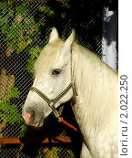 Купить «Лошадь», фото № 2022250, снято 26 сентября 2010 г. (c) Юлия  Лесина / Фотобанк Лори