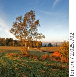 Золотая осень. Стоковое фото, фотограф Максим Блинов / Фотобанк Лори