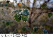 Первый заморозок. Стоковое фото, фотограф Максим Блинов / Фотобанк Лори