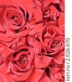 Купить «Букет красных роз», фото № 2026670, снято 8 сентября 2010 г. (c) Александр Катайцев / Фотобанк Лори