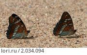 Бабочки. Стоковое фото, фотограф Сергей Прокопьев / Фотобанк Лори