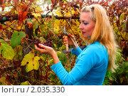 Молодая девушка держит в руках срезанную гроздь винограда. Стоковое фото, фотограф Евгений Курлыкин / Фотобанк Лори