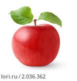 Купить «Красное яблоко с зелеными листьями», фото № 2036362, снято 5 октября 2010 г. (c) Анна Кучерова / Фотобанк Лори