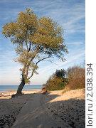 Купить «Дерево, растущее на песке», эксклюзивное фото № 2038394, снято 7 октября 2010 г. (c) Svet / Фотобанк Лори