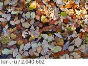 Фон из опавших листьев. Стоковое фото, фотограф Ольга Крупская / Фотобанк Лори