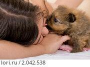 Купить «Девочка играет со щенком шпица», фото № 2042538, снято 19 сентября 2010 г. (c) Egorius / Фотобанк Лори