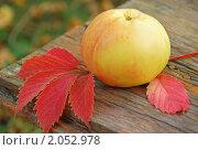 Купить «Спелое яблоко лежит на лавочке», фото № 2052978, снято 10 августа 2010 г. (c) Светлана Зарецкая / Фотобанк Лори