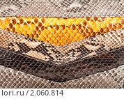 Купить «Текстура змеиной кожи», фото № 2060814, снято 14 октября 2010 г. (c) Андрей Армягов / Фотобанк Лори