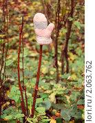 Купить «Розовая потерянная варежка на ветке», фото № 2063762, снято 14 октября 2010 г. (c) Светлана Зарецкая / Фотобанк Лори