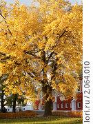 Купить «Золотой клен в Новодевичьем монастыре. Москва», фото № 2064010, снято 18 октября 2010 г. (c) Валерия Попова / Фотобанк Лори