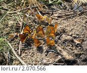 Бабочки. Стоковое фото, фотограф Королькова Татьяна Викторовна / Фотобанк Лори