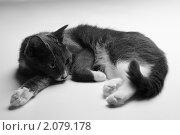Грустный кот. Стоковое фото, фотограф Юрий Бульший / Фотобанк Лори