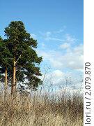 Одинокое дерево. Стоковое фото, фотограф Шишмарёва Евгения / Фотобанк Лори
