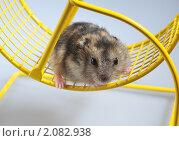 Купить «Из серии:домашние животные», фото № 2082938, снято 26 октября 2010 г. (c) Максим Коломыченко / Фотобанк Лори