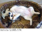 Купить «Спящий щенок», фото № 2085174, снято 19 октября 2010 г. (c) Сергей Лаврентьев / Фотобанк Лори