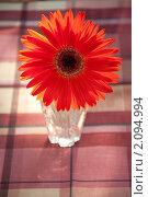 Красная гербера в хрустальной вазочке на столе. Стоковое фото, фотограф Абушкина Мария / Фотобанк Лори