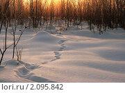Купить «Зимний вечер в тайге. Ханты-Мансийский автономный округ.», фото № 2095842, снято 3 февраля 2008 г. (c) Алексей Рогожа / Фотобанк Лори