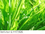 Купить «Абстрактный зеленый фон, трава с каплями воды», фото № 2117926, снято 23 июля 2009 г. (c) Светлана Зарецкая / Фотобанк Лори