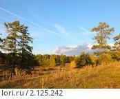 Купить «Осенний пейзаж с березами и соснами», фото № 2125242, снято 17 сентября 2010 г. (c) Виталий Горелов / Фотобанк Лори