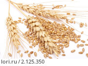 Зерна и колосья пшеницы. Стоковое фото, фотограф Дмитрий Сечин / Фотобанк Лори