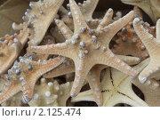 Купить «Морская звезда», фото № 2125474, снято 9 сентября 2010 г. (c) Мариэлла Зинченко / Фотобанк Лори