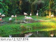 Розовый фламинго. Стоковое фото, фотограф Унчикова Екатерина Андреевна / Фотобанк Лори