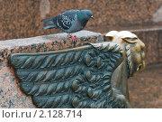 Купить «Грифон и голубь. Санкт-Петербург», эксклюзивное фото № 2128714, снято 6 ноября 2010 г. (c) Александр Алексеев / Фотобанк Лори
