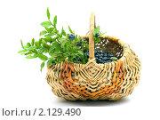 Купить «Черника в корзинке», фото № 2129490, снято 29 июля 2010 г. (c) Ирина Солошенко / Фотобанк Лори