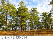 Купить «Осенний пейзаж с лиственницей», фото № 2130014, снято 18 сентября 2010 г. (c) Виталий Горелов / Фотобанк Лори