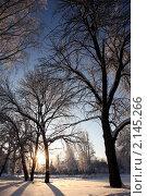 На закате. Стоковое фото, фотограф Ольга Зенухина / Фотобанк Лори