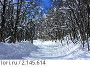 Дорога в зимнем лесу со следами лыж. Стоковое фото, фотограф Тамара Магомедова / Фотобанк Лори