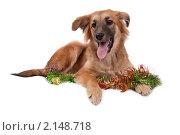 Купить «Собака», фото № 2148718, снято 20 сентября 2019 г. (c) Cветлана Гладкова / Фотобанк Лори